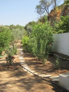 footpath on bottom terrace 27-8-13 (2)
