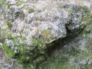 green moss on exposed rock at stepping stones in August 17-8-13