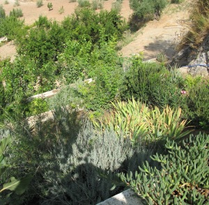 looking down at terraces from above 27-8-13 (2)