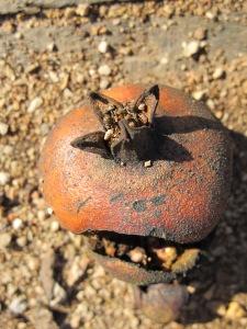 pomegranate close-up3 5-1-14