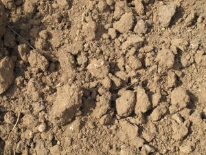 soil in the orchard 1-5-13