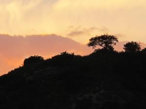 sunset2 7-10-13