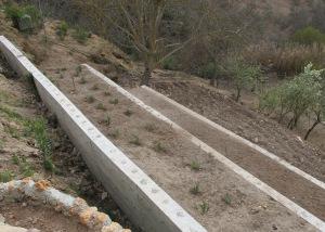 terraces growing 14-5-12