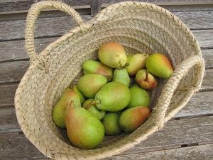 little pears 5-8-13