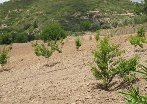 trees 28-5-10