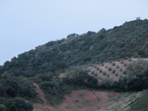 valley @ dusk2 16-3-13