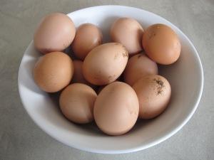 eggs- freshly-laid 5-3-14