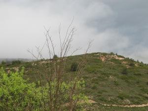mist after rain4 19-3-13 (2)