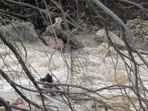 river after storm1 26-3-13