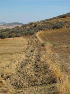 #21 golden lines - weeds mark the border between two parcelas 12-10-13