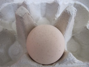 egg - close-up in box 17-4-14
