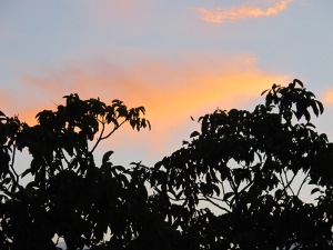 sunset through walnut tree 7-10-13