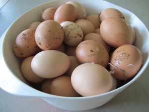 bowl of eggs 10-5-14