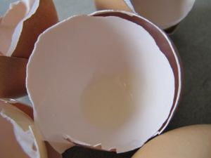 egg shells 20-5-14