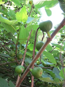 figs2 9-5-14