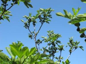 figs5 9-5-14