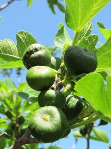 figs6 9-5-14