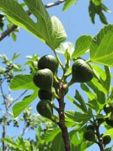 figs7 9-5-14