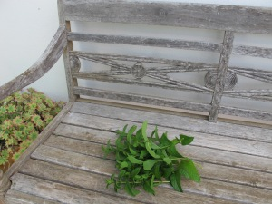 mint - bunch on bench 22-5-14