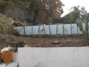 new planting 14-1-12