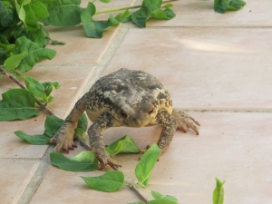 toad2 8-4-15