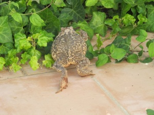 toad6 8-4-15