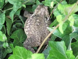toad8 8-4-15