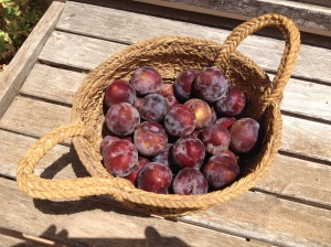 basket of plums 18-7-14