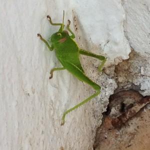 bug2 24-7-14