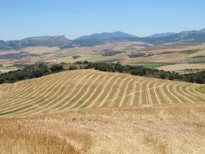 field after harvest1 1-7-14