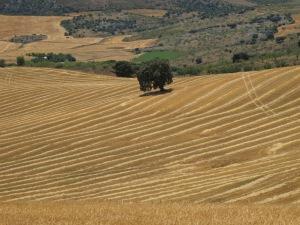 field after harvest2 1-7-14