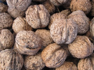 K is for - kernel, our walnuts 9-11-11