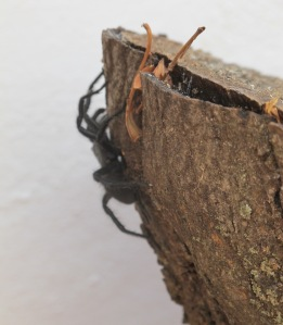 L is for - large spider on log in july 12-7-11