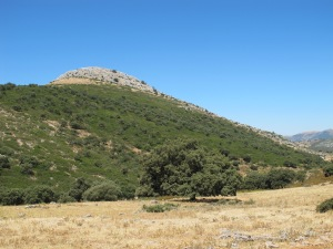 la atalaya - the watchtower 29-7-13 (2)