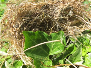N is for - sparrow nest 26-6-13 (2)