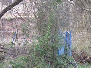 the old blue bridge1 26-3-13