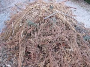 #25 pile of prunings 21-8-13