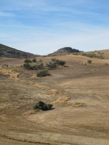 #30 dried golden soil awaits winter crops 12-10-13