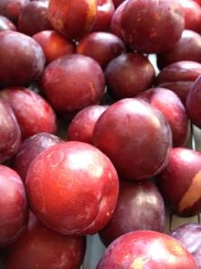 plums 10-8-14