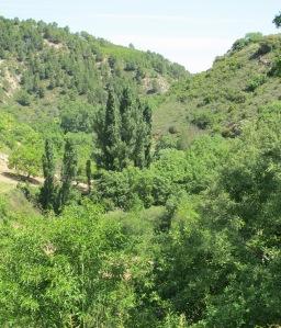4 April poplars in the valley 28-4-11