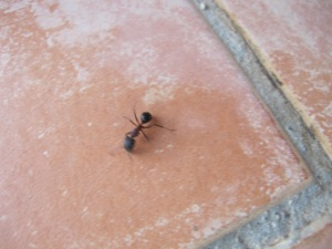large ant1 25-8-14