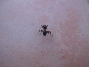 large ant2 25-8-14