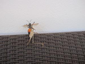 orange insect 25-8-14