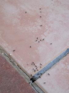 tiny ants1 25-8-14