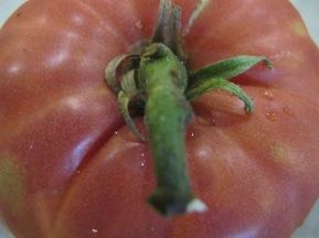 tomato 24-8-14