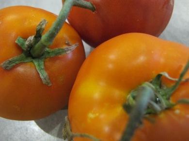tomatoes 24-8-14