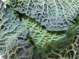 cabbage - close-up 21-10-14