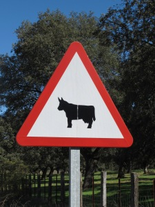 road sign - cow or bull 10-10-14