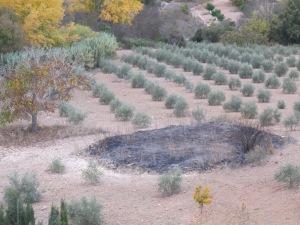 11 threshing patch - burnt 17-11-13