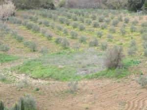 3 threshing patch 17-3-13
